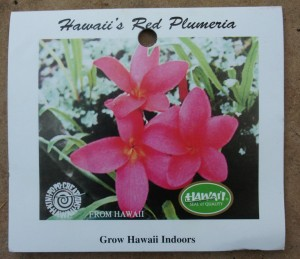 Hawaii's Red Plumeria