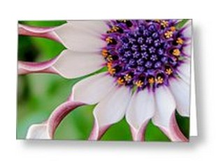 TK Goforth Fine Art Photography Greeting Cards