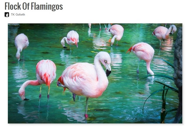 Flock of Flamingos by T.K. Goforth
